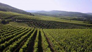 Razpis za ohranjanje in razvoj majhnih kmetij