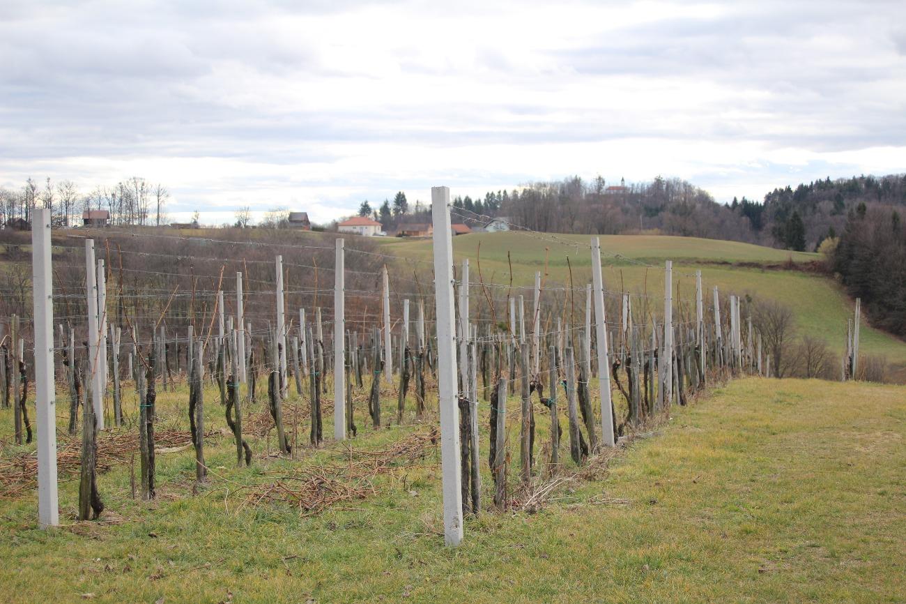 Varstvo vinske trte