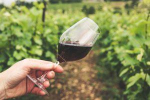 Spletno predavanje: Dognojevanje vinogradov in stabilizacija vin