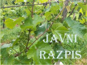 Javni razpis za vinogradnike